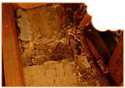 Termite damage located in the roof during an inspection.